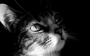 Black-and-White-Mysterious-Cat-1200x750