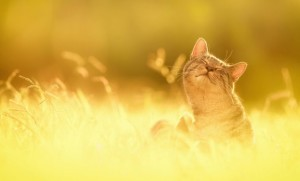 Cat-Sun-God-640x388