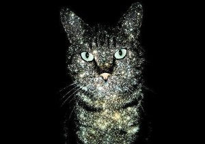cat-cosmic-planets-solar-stars-Favim.com-179481