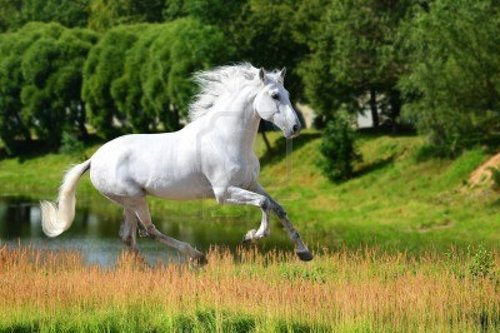 a dream of 3 white horse, mare and horse/mare